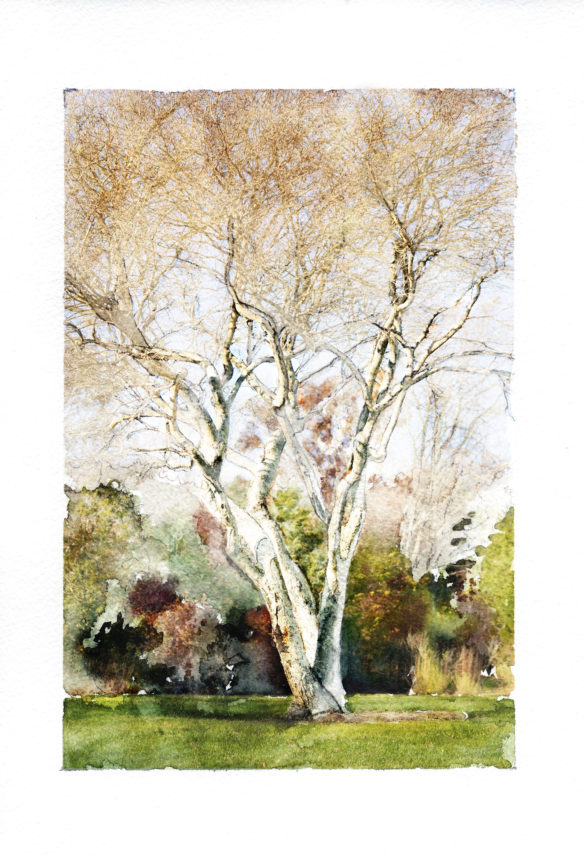Montauk, watercolor, shad, serviceberry, photograph, fall